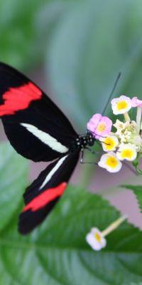 WildsauSeo Schmetterling SeoDay 2019