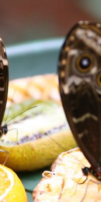 WildsauSeo Schmetterling SeoDay 2019